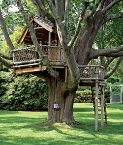 treehouse backyard
