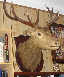 mounted deer head on wall