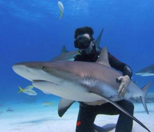 shark hug