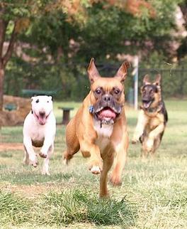 RunningDogs