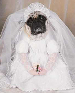 How to Marry Your Pet